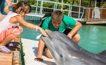 Swim with the dolphin in freeport bahamas