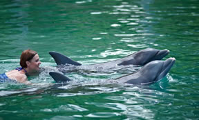Take the 2 night cruise to swim with th dolphins in Freeport Bahamas